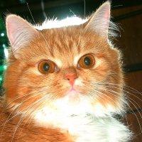 Кошка :: Vitaliy Mezentsev