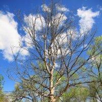 Дерево :: Алексей С