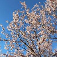 Весна :: Наталья Старовойтова