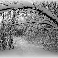 Прогулка в зимнем лесу (чб) :: Елена Перевозникова