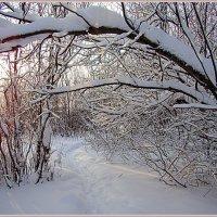 Прогулка в зимнем лесу :: Елена Перевозникова