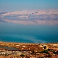 Ольга Шибайко - Мертвое море