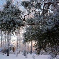 Зимняя сказка :: Ольга Гавриленко