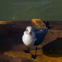 чайка по имени джонатан ливингстон :: Aleksey Donskov