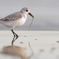 Песчанка и червяк :: natalia paklina