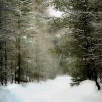 Зима в теплых тонах. Тропинка. :: Сергей Угренев