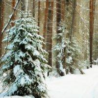 Зима в теплых тонах :: Сергей Угренев
