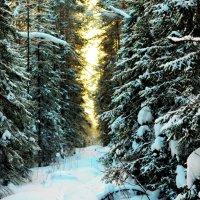 Зима в теплых тонах. Просека :: Сергей Угренев