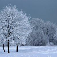 зимняя прогулка :: Светлана Амелина