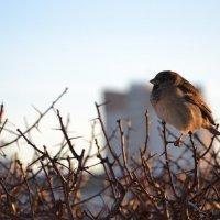 Важная птица :: Арина Шибаева