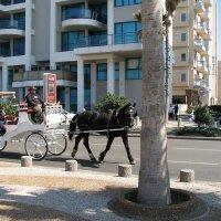 Тель-авив#1 :: Михаил Малец