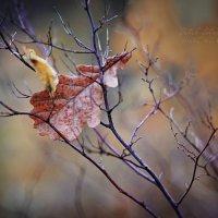 Осенняя грусть 3 :: Elya Vatel