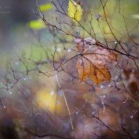 Осенняя грусть 2 :: Elya Vatel