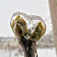 Ледяная клетка :: Игорь Мукалов