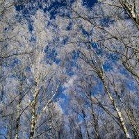 Зимний рай :: Павел Данилевский