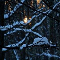 зимний лес :: Мария Мжельская