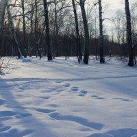 Снега и тропы. :: Яков Реймер