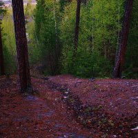 Красота загадочного леса :: Даша Плешкова
