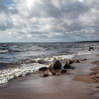 Берег в Комарово :: Сергей