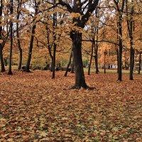 Осень в парке :: Nikolay Monahov