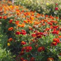 Клумба цветов :: Надежда Власова