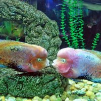 Первый поцелуй :: Александр Резуненко