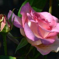 Роза :: Полина Гудина