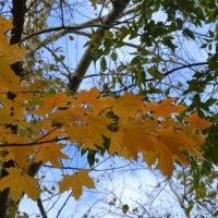 Поспорим, осень... :: Танюша Коc