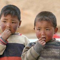 Дети Тибета. :: Аркадий Шведов