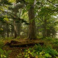 Таинственный лес :: Александр Хорошилов
