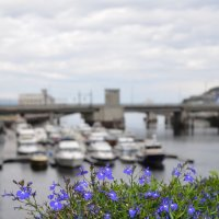 Цветы на мосту. :: Ольга