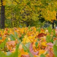 осень. :: Паша Зайцев