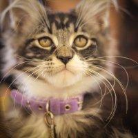 На выставке кошек в Минске. :: Nonna