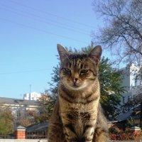 Котик :: Serg
