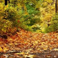 ковер осенних листьев :: лиана алексеева