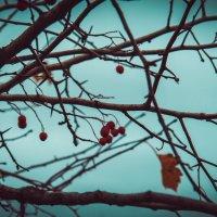 Одинокое :: Ksenya Morozik