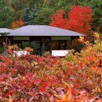 Осень в Японском садике. :: Николай Кондаков