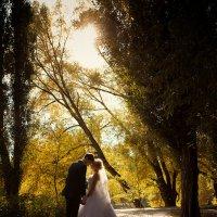 Осенние Свадьбы :: Mitya Galiano