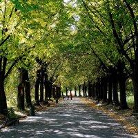 Осень в Ботаническом саду Фото №3 :: Владимир Бровко