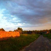 Дуброва под солнцем :: Mary Коллар
