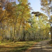 Осенние , лесные дороги . :: Мила Бовкун