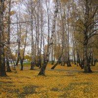Осень в берёзовой роще . :: Мила Бовкун