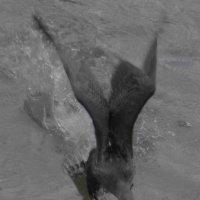 Бегом по воде и ... взлёт! :: Юрий Поляков
