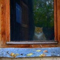 Осень и кот. :: Надежда Павлючкова