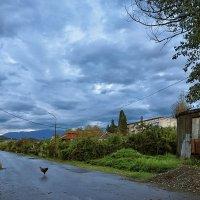 Почему  переходит курица через дорогу туда и сюда? :: Ирина Данилова