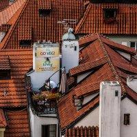 Веганский ресторан на крыше :: Анатолий Мигов