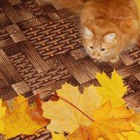 Осенние листья :: Елена Федотова