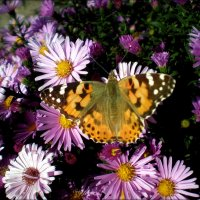 Осенняя бабочка :: Татьяна Пальчикова
