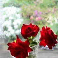 О красных розах... :: galina tihonova