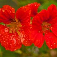 Цветок красный. :: Ирина Токарева